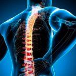 Patología de la<br>columna vertebral